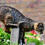 Best Cat Repellents for Garden