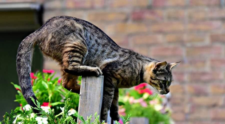Best Cat Repellents for Garden