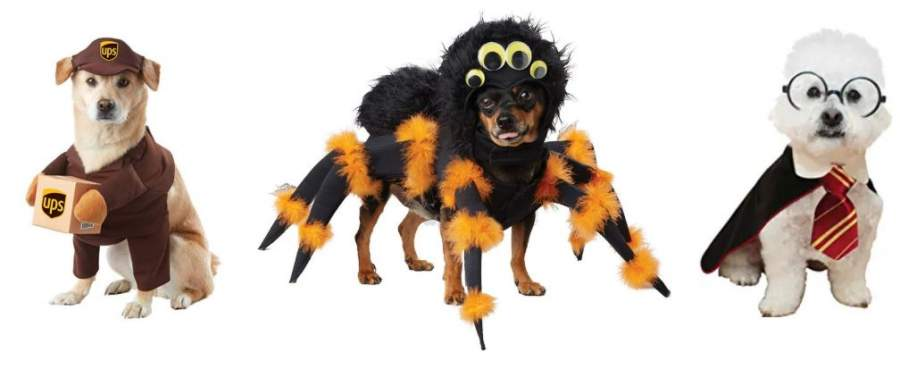 Cute Halloween Costumes for Small Dogs
