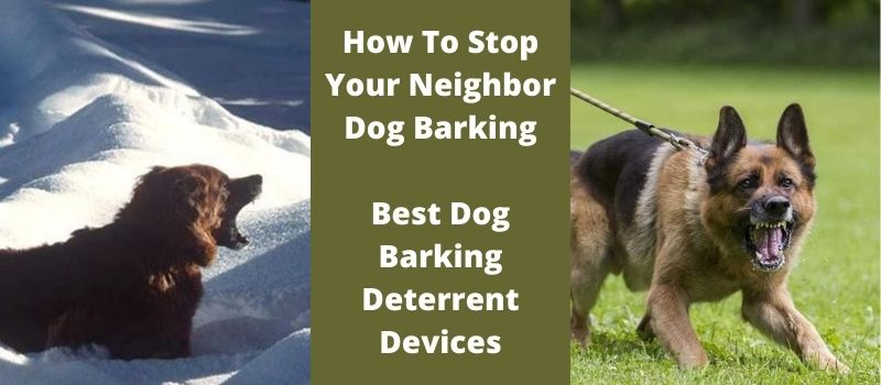 How To Stop Your Neighbor Dog Barking (Best Dog Barking Deterrent Devices)