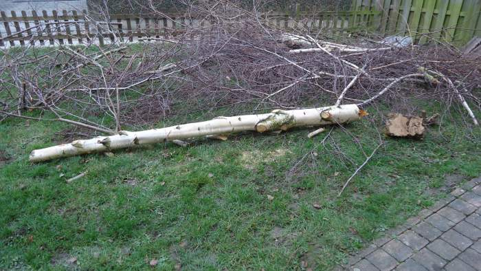 The tree in the garden cut down with my new electric chain saw.