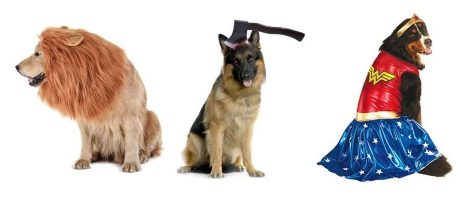 Large Dog Halloween Costumes Ideas